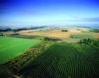 Agricoltura. Compag. Marchio DOP a rischio in Italia.