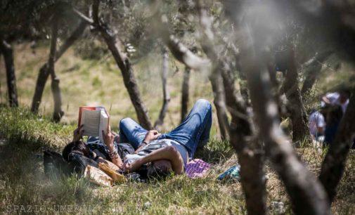 """""""Pic & Nic a Trevi. Arte, musica e merende tra gli olivi"""""""