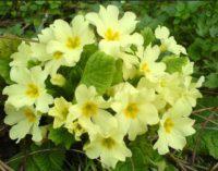 Parco Valle del Treja – Visita guidata con riconoscimento di piante e fiori primaverili