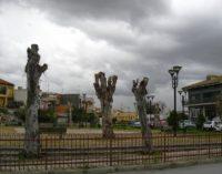 L'ecologismo del consumo verde e dell'albero per sempre