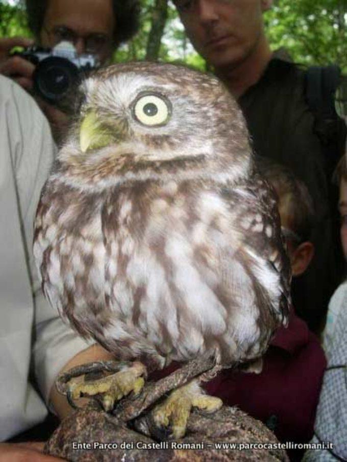 L'impegno del Parco per la tutela della fauna selvatica