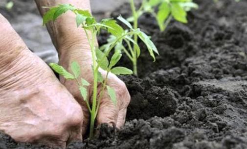 I benefici di occuparsi del giardino: quali attività svolgere per rilassarsi e fare movimento?