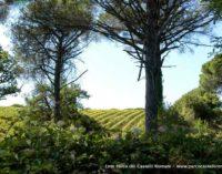 Rassegna nazionale dei vini di Parchi e Aree Protette