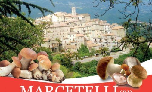 Il fungo porcino è il grande protagonista a Marcetelli (RI) il 14 luglio