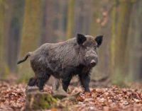 Parco Valle del Treja – Prosegue la collaborazione con gli agricoltori per prevenire i danni da fauna selvatica nel Parco