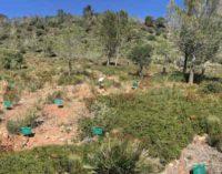 Più di 500 alberi piantati nel Bosco degli embrioni