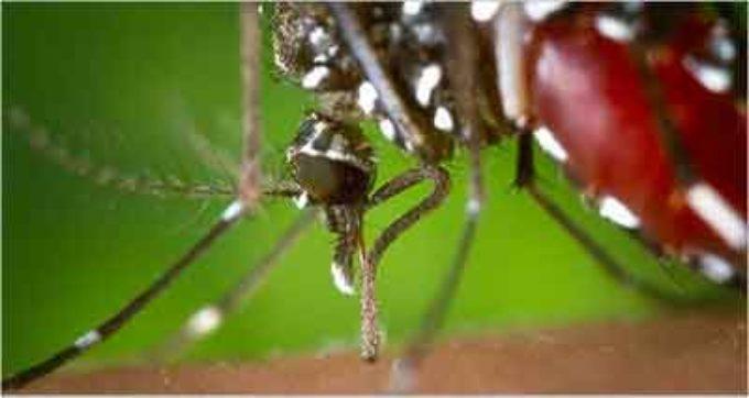 Salute: zanzara tigre, ENEA con la startup Biovecblok per nuovo metodo di lotta 'naturale'
