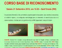 SERPENTI ITALIANI: CORSO BASE DI RICONOSCIMENTO