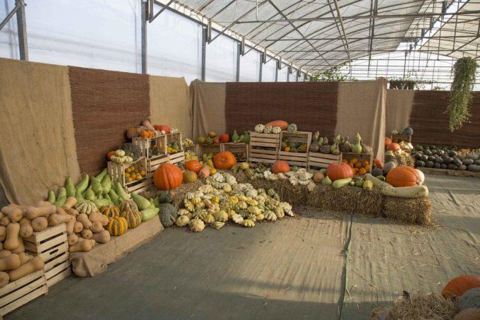 """Domenica 27 ottobre """"Halloween Party: 'UNA SCUOLA DA PAURA' e …Speciale open day della Scuola di Minoprio"""""""