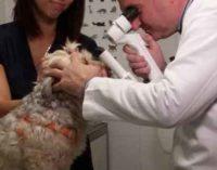 """Week end prevenzione e salute per l'Ordine Veterinari d Roma presente a """"Un lavoro da cani"""""""