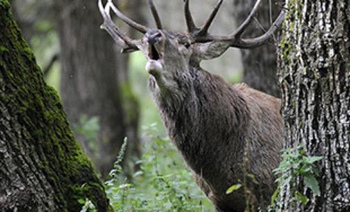 Non perderti le 100 foto di Natura più belle dell'anno!