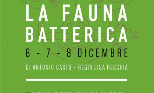 La fauna batterica, 6-8 dicembre Nuovo Teatro San Paolo