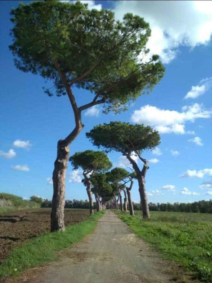 Italia Nostra, Fai e Wwf: percorso ciclabile nella Riserva Litorale?