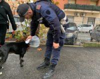 Pomezia – Microchip cani, al via controlli della Polizia locale