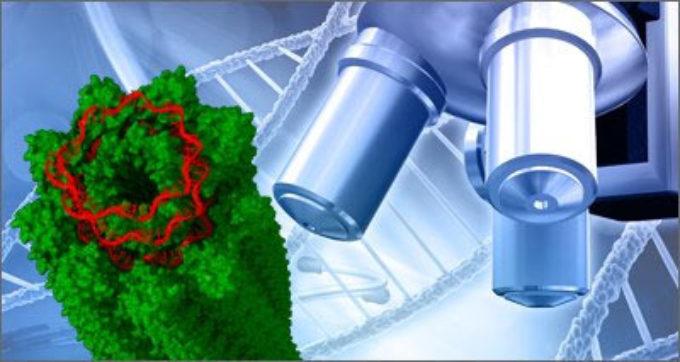 Ricerca: su Nature studio ENEA-Università di Padova -ESRF su struttura del Potato Virus X