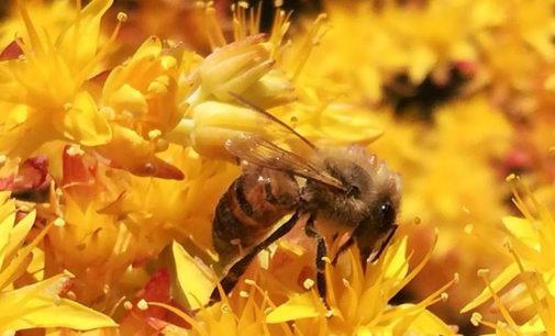 #LaPrimaverainFinestra, come aiutare gli insetti impollinatori