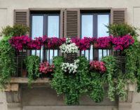 Frascati, arriva il concorso Ventimila Fiori sui Balconi