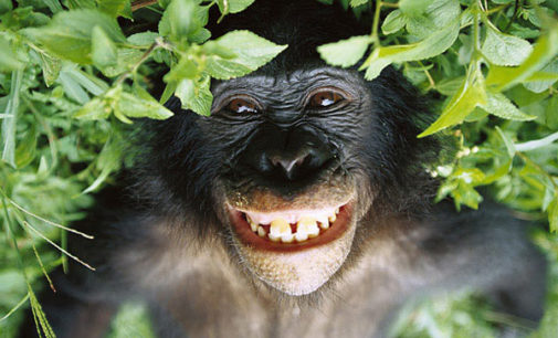 """Usanze pansessuali dei bonobo e furbizia umana del calarsi le braghe"""