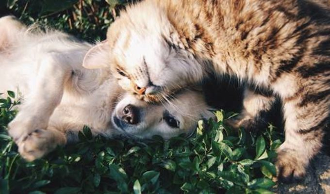 Giornata mondiale degli animali – 4 ottobre