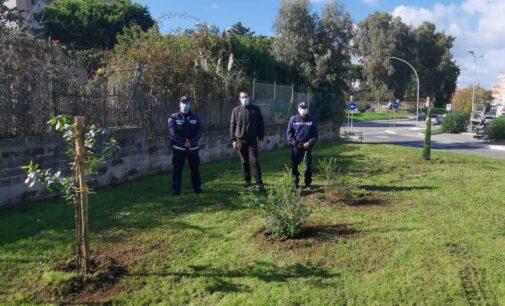 Verde a Pomezia, la Polizia locale dona 6 nuovi alberi e arbusti alla Città