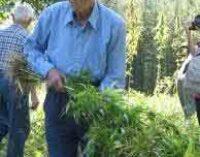 Libertà di coltivazione della canapa bioregionale