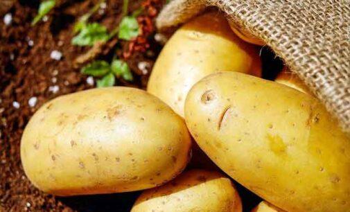 La patata è protagonista di Leonessa dal 10 all'11 ottobre