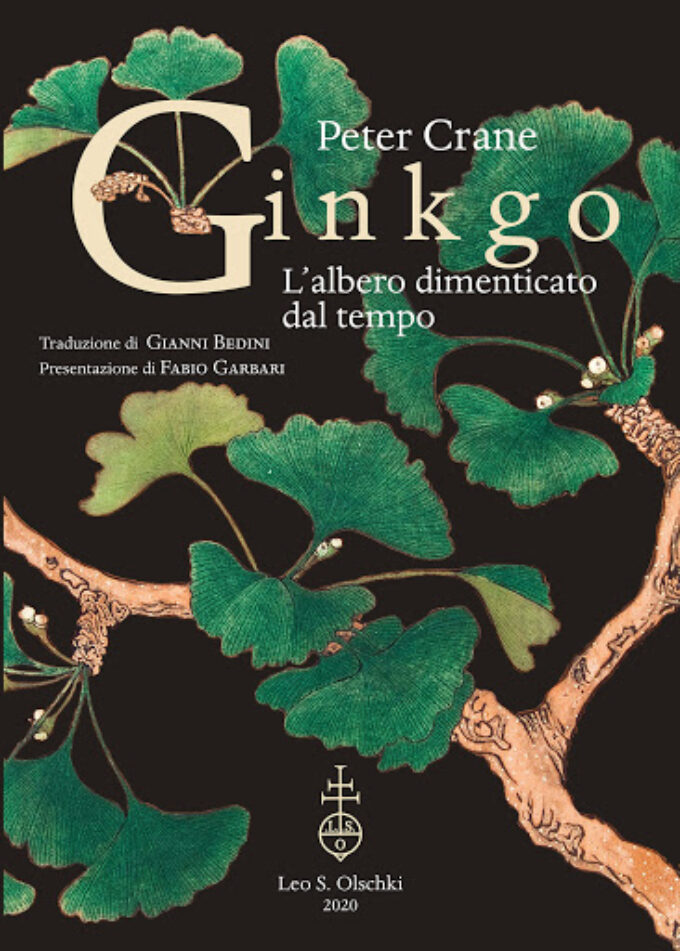 """""""Ginkgo L'albero dimenticato dal tempo"""""""
