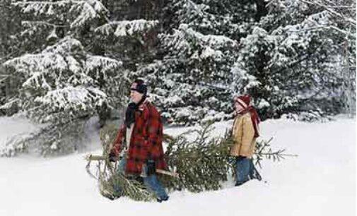 La nostra annuale campagna per il salvataggio di innocenti alberi