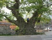 Un (mai) vecchio messaggio d'amore per l'albero