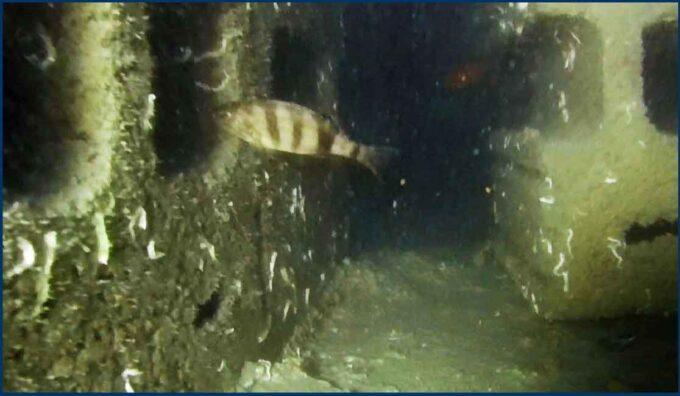 Pomezia – Barriere artificiali contro la pesca a strascico