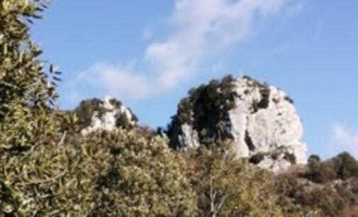 Salviamo il Bosco delle Lucinette nella Valle dei Monasteri