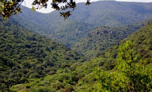 Discorso sul bioregionalismo e sul patrimonio forestale naturale