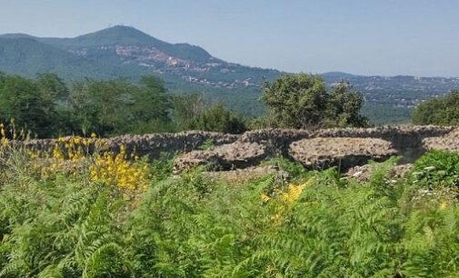 Vegetazione spontanea, sinonimo di equilibrio e biodiversità