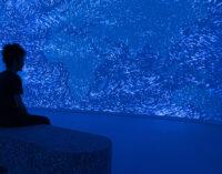 """Lo studio italiano Dotdotdot protagonista della riapertura del maat di Lisbona con """"EARTH BITS – Sensing the Planetary"""", installazione immersiva dedicata all'emergenza climatica"""