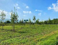 "Un ""bosco"" per la salute a Casteldebole"