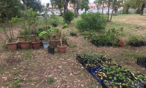 ARDEA – EXCALIBUR dona 250 piante al Parco Rielasingen