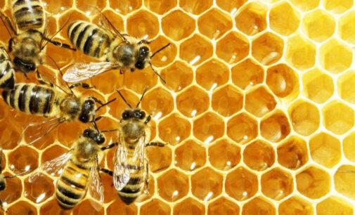 20 maggio 2021 – Giornata mondiale delle api