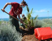 Verde a Pomezia, l'associazione Inner Wheel dona oltre 100 piante alla Città
