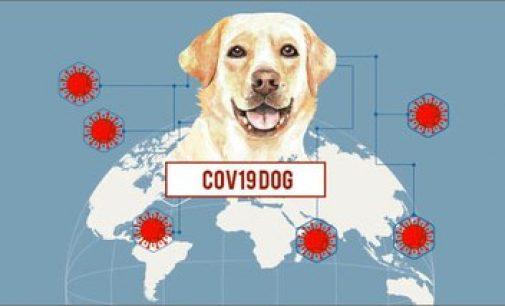 COVID-19: sensori, intelligenza artificiale e cani 'molecolari' per rintracciare il virus