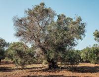 Cambiamenti climatici e malattie delle piante