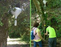 Insetti: i monitoraggi in corso nel Parco dei Castelli Romani