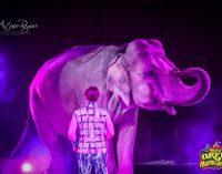 Il Maya Orfei Circo Madagascar, il circo più grande d'Italia a Silvi Marina