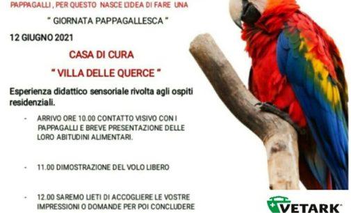 Nemi – Dimostrazione di volo libero con i pappagalli alla Casa di Cura Villa delle Querce