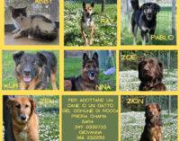 _Rocca Priora: nuova gestione cani e canile