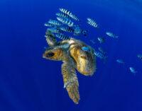 World Ocean Day:Isole Canarie custodi dell'ecosistema marino
