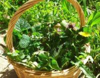 Alimentazione naturale… Alcuni consigli spiccioli!