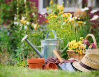 Giardinaggio: tutto quello che c'è da sapere sui tappeti erbosi