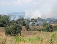 Divampano le fiamme nella Riserva Regionale della Sughereta di Pomezia