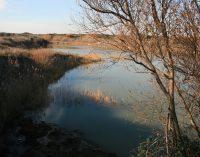 Ambiente, richieste due nuove aree protette nel territorio di Pomezia