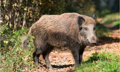 Si apre alla possibilità di sparare alla fauna selvatica nei Parchi